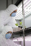 Workers In Protective Masks And Suits With Plant In Lab Royalty Free Stock Photography
