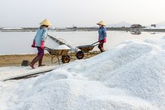 Workers push wheelbarrows at the Hon Khoi salt fields in Nha Tra Stock Photo