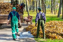 Workers removing fallen leaves in autumn in city parl. seasonal foliage cleaning in fall. Uploading garbage into truck royalty free stock photos