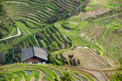 Workers in the rice terraces in Longsheng, China Stock Photo