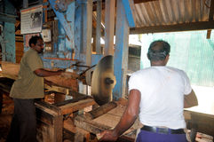 Workers in sawmill factory Royalty Free Stock Image
