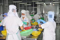Workers are selecting octopus to put to the freezing machine in a seafood factory in Vietnam Stock Photo