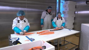 Workers slicing a fillet of salmon at table on the fish factory. Dolly shot. stock footage