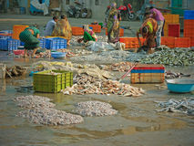 Workers sorting fish on an Gujarati quayside Royalty Free Stock Images