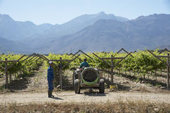 Workers spraying vines South Africa Stock Photo