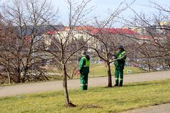 Workers supervising sakura trees in Vilnius city Royalty Free Stock Image