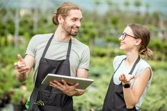 Workers with tablet in the greenhouse. Couple of workers in uniform using digital tablet working with plants in the greenhouse of the plant shop Stock Photos