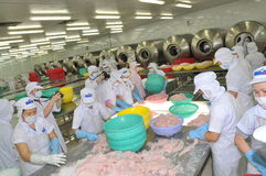 Workers are testing the color of pangasius fish in a seafood processing plant in Tien Giang, a province in the Mekong delta of Vie Royalty Free Stock Image