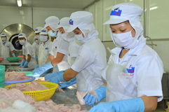 Workers are testing the color of pangasius fish in a seafood processing plant in Tien Giang, a province in the Mekong delta of Vie Stock Photos