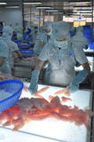 Workers are testing the color quality of pangasius fish fillets in a seafood processing plant in An Giang, a province in the Mekon Stock Photo