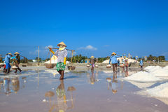 Workers transporting salt from the fields Stock Photos
