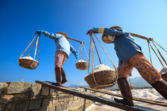 Workers transporting salt from the fields Stock Photography