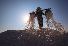 Workers transporting salt from the fields Stock Images