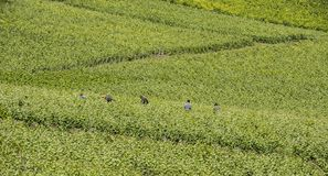 Workers in Vineyard La Neuville-Aux-Larris France Royalty Free Stock Photography