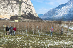 Workers in vineyard in Tirol in winter Royalty Free Stock Photos