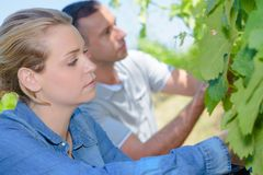 Workers on the vineyard stock photography