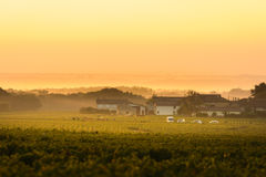 Workers in vineyards of Beaujolais during the golden hour Royalty Free Stock Images