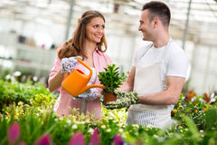 Workers water flowers in greenhouse Royalty Free Stock Photo