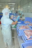 Workers are weighing of pangasius catfish fillet  in a seafood processing plant in An Giang, a province in the Mekong delta of Vie Royalty Free Stock Image