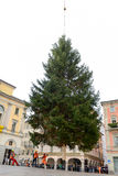 Workers who move a Christmas tree who is deposited from a helicopter. Lugano, 20 novembre 2015 - Workers who move a Christmas tree who is deposited from a Stock Image