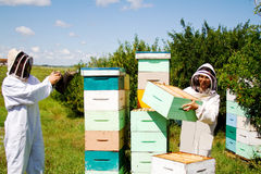 Workers working with beehives. Two workers checking beehives using smoke stock photography