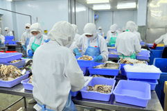 Workers are working hard in a seafood factory in Ho Chi Minh city, Vietnam Stock Image
