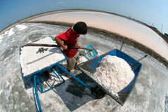 Workers are working at a salt farm in Thailand. SAMUTSONGKHRAM,THAILAND - FEB 18: Unidentified workers carrying salt at the salt farm on February 18,2014 in royalty free stock photography