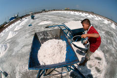 Workers are working at a salt farm in Thailand. SAMUTSONGKHRAM,THAILAND - FEB 18: Unidentified workers carrying salt at the salt farm on February 18,2014 in stock photos