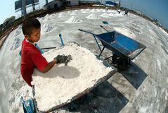 Workers are working at a salt farm in Thailand. SAMUTSONGKHRAM,THAILAND - FEB 18: Unidentified workers carrying salt at the salt farm on February 18,2014 in stock photo
