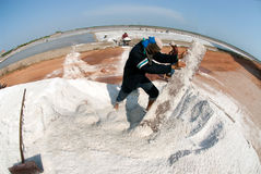 Workers are working at a salt farm in Thailand. SAMUTSONGKHRAM,THAILAND - FEB 18: Unidentified workers carrying salt at the salt farm on February 18,2014 in royalty free stock photo