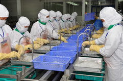 Workers are working in a shrimp processing plant in Hau Giang, a province in the Mekong delta of Vietnam Stock Image