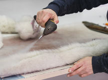 Workflow and making the animals fur Stock Photo