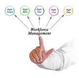 Workforce Management. Presenting Diagram of Workforce Management Royalty Free Stock Images
