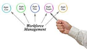Workforce Management. Presenting Diagram of Workforce Management Royalty Free Stock Image