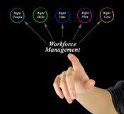 Workforce Management. Presenting diagram of Workforce Management Royalty Free Stock Photo