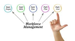 Workforce Management. Presenting Diagram of Workforce Management Stock Photography