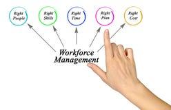 Workforce Management. Presenting diagram of Workforce Management Royalty Free Stock Photos