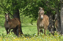 Workhorse. Grazing in the pasture. Meadow in the valley Royalty Free Stock Image