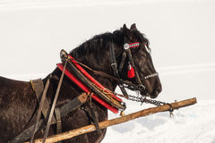 Workhorse inactive after work Royalty Free Stock Photo