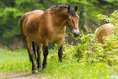 Workhorse inactive after work. Workhorse is inactive after hard work Royalty Free Stock Images