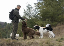 Working with Animals - Dog Whisperer. A dog whisperer enjoys time out of doors with a group of dogs who respond well to his calming presence Royalty Free Stock Images