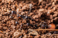 Working ants. Macro shot of some ants working together Stock Image