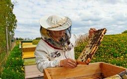 Working apiarist. Stock Photo