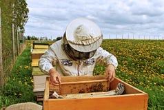 Working apiarist. Stock Photos