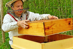 Working apiarist. Royalty Free Stock Photography