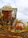 Working apiarist. Royalty Free Stock Image