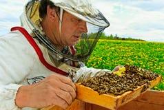 Working apiarist. Royalty Free Stock Photo