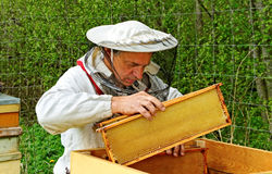 Working apiarist. Stock Photography