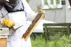 Working apiarist. Beekeeper holding a frame of honeycomb Royalty Free Stock Photos