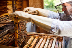 Working apiarist Royalty Free Stock Image